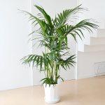 風水 玄関に置く観葉植物の置き方や場所でこれだけ違う